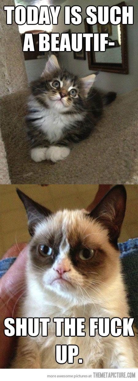 Hahaha I love the grumpy cat!!