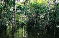 Liberati dalle emozioni: Le piante intelligenti dell'Amazzonia