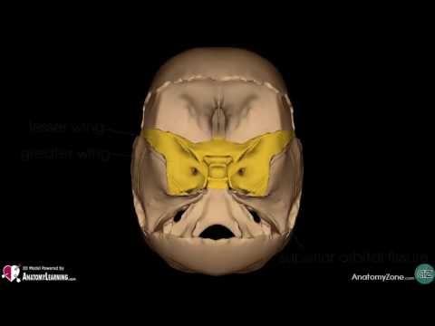 Eye - Bony Orbit | Anatomy Tutorial - YouTube