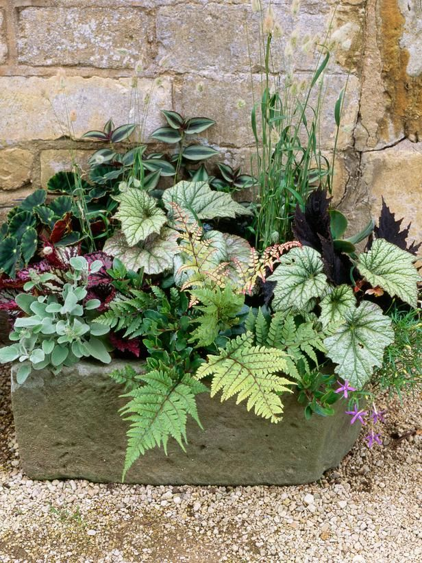 A variety of shade loving plants like FERNS etc... - perfectly suited for a shady garden, patio or porch
