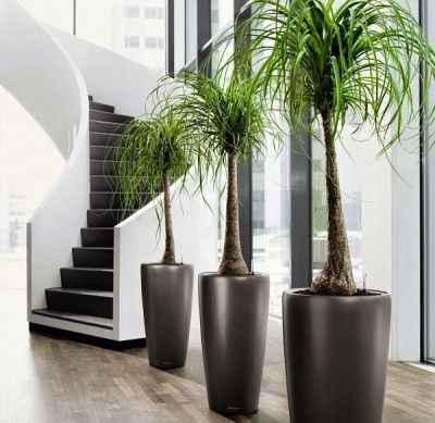 plantas de interior sin