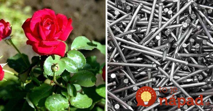 Chce to len inšpirovať sa tipy a trikmi, ktoré poznali a používali pestovatelia už pred rokmi. Takto donútite vaše kvety kvitnú dlhšie a bohatšie.
