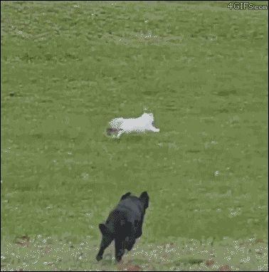 Este perrito salió persiguiendo un gato y terminó aprendiendo un genial truco en la escalera