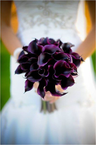 Calla Lilly. Can't decide if I'd love red, purple, or black with tiger lilies...tiger lilies + black iris + red or purple calla? Guess I'll decide years from now lol