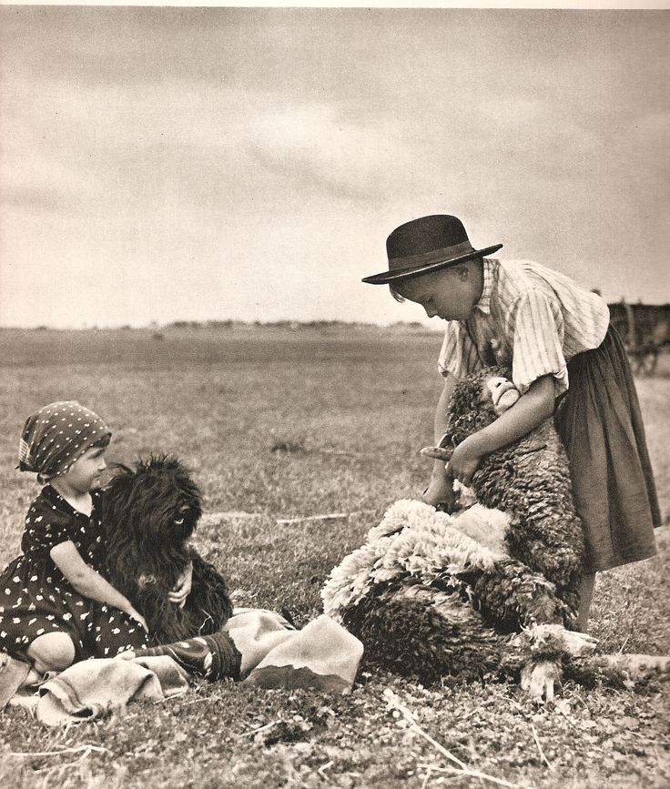 """Old photo showing the puli out in his working environment. The master is shearing sheep as the dog looks on. It's from a book called """"Images of Hungary"""" (translation of Hungarian text)."""