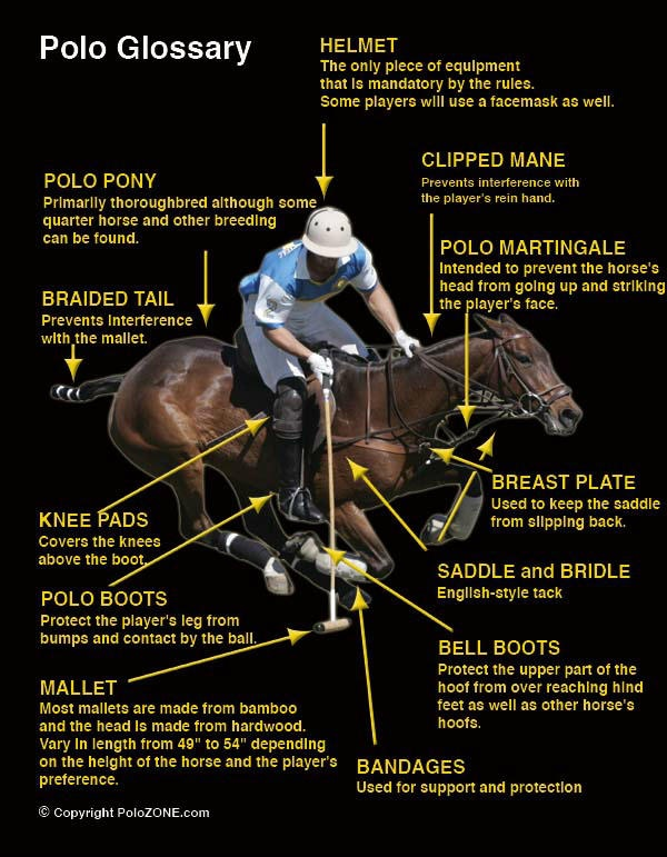 Polo glossary.  #horses #kneepads #polopony #polo #poloboots #saddle #mallet #bellboots