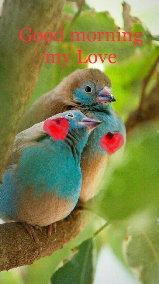 Good Morning Days And Nights Animals Pretty Birds Colorful Birds