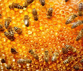 Tire proveito dos benefícios de remédios naturais provenientes das abelhas, como mel, pólen, própolis e geleia real. Saiba mais sobre o bem que esses produtos fazem e aprenda como usá-los a seu favor: Os benefícios do mel envolvem o fortalecimentos do sistema imunitário, auxiliar no processo
