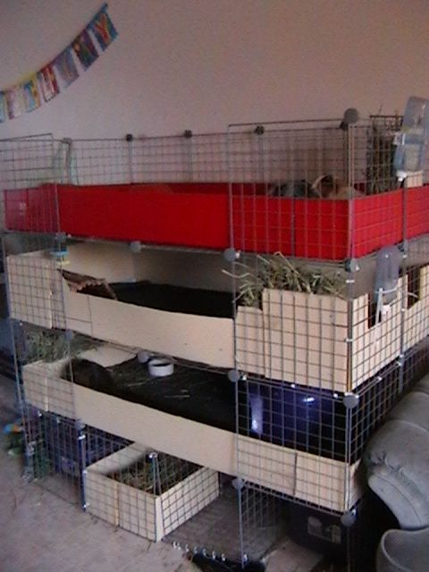 Best guinea pig cage guinea pigs cages paganspace for Guinea pig cage for 3