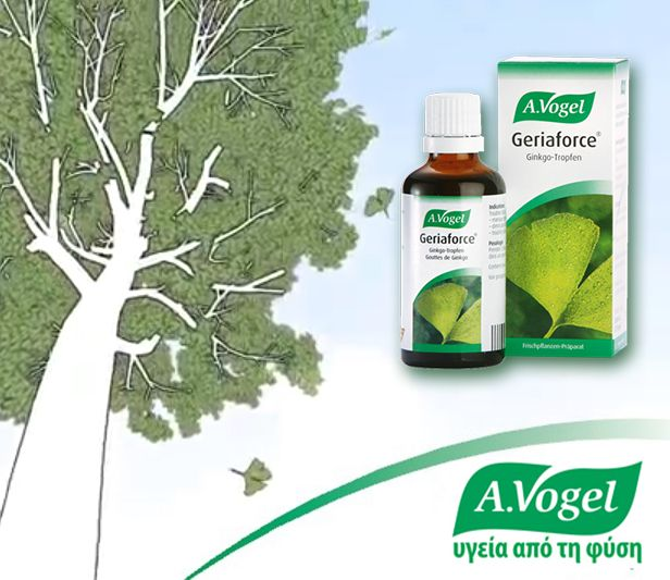 Bάμμα A.VogelGeriaforce από φύλλα Ginkgo-biloba φρέσκιας συγκομιδής.Είναι από τα παλαιότερα,γνωστά στον άνθρωπο,βότανα.Φρέσκα,πράσινα φύλλα Ginkgo biloba,συγκεντρώνονται κάθε άνοιξη για να δημιουργήσουν το βάμμα A.Vogel Geriaforce,που συμβάλλει στην καλύτερη κυκλοφορία του αίματος στον εγκέφαλο και στη διατήρηση της υγιούς κυκλοφορίας του αίματος γενικότερα.  http://www.avogel.gr/product-finder/avogel/geriaforce_tinct.php