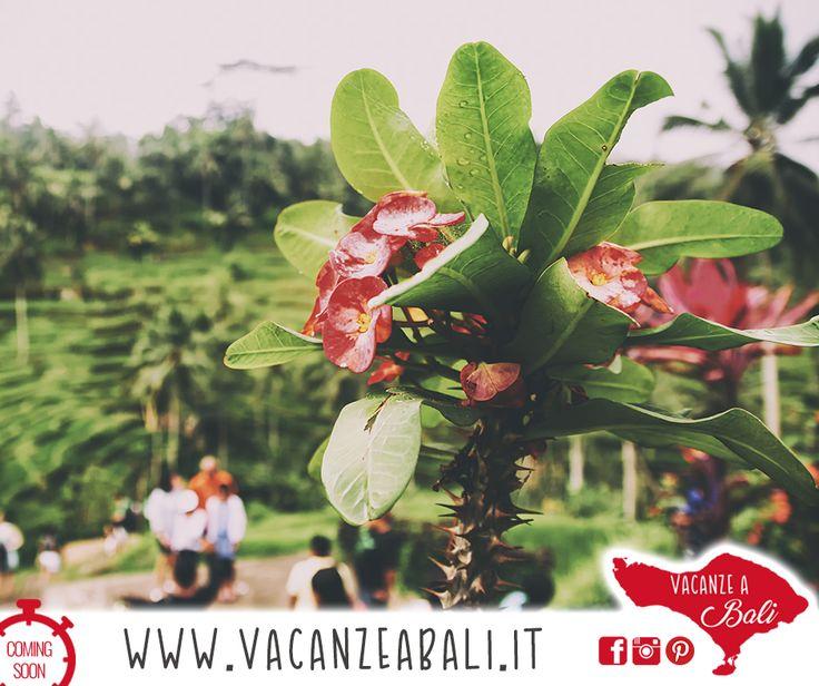 Mancano pochi giorni alla messa online del portale www.vacanzeabali.it, il nuovo sito in italiano dedicato alle bellezze di Bali. Un esempio? Meravigliosi terrazzamenti di riso, tutti da esplorare e fotografare, circondati da un'esplosione di colori tropicali: Bali è questo e molto altro!           Vuoi scoprire i migliori PANORAMI MOZZAFIATO DA FOTOGRAFARE?  Metti  ❤️ a questo post, e invita i tuoi amici a seguire la nostra pagina!   www.vacanzeabali.it   Il paradiso a portata di click!