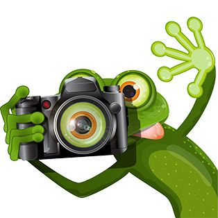 frog with camera transparent