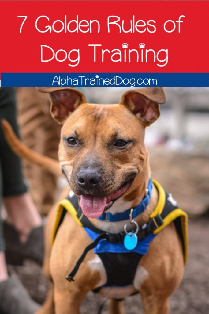 The Complete Lowdown On Dog Clicker Training Dog Clicker