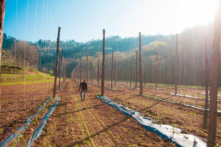 Luppoleto | Società Agricola Elav | Bergamo