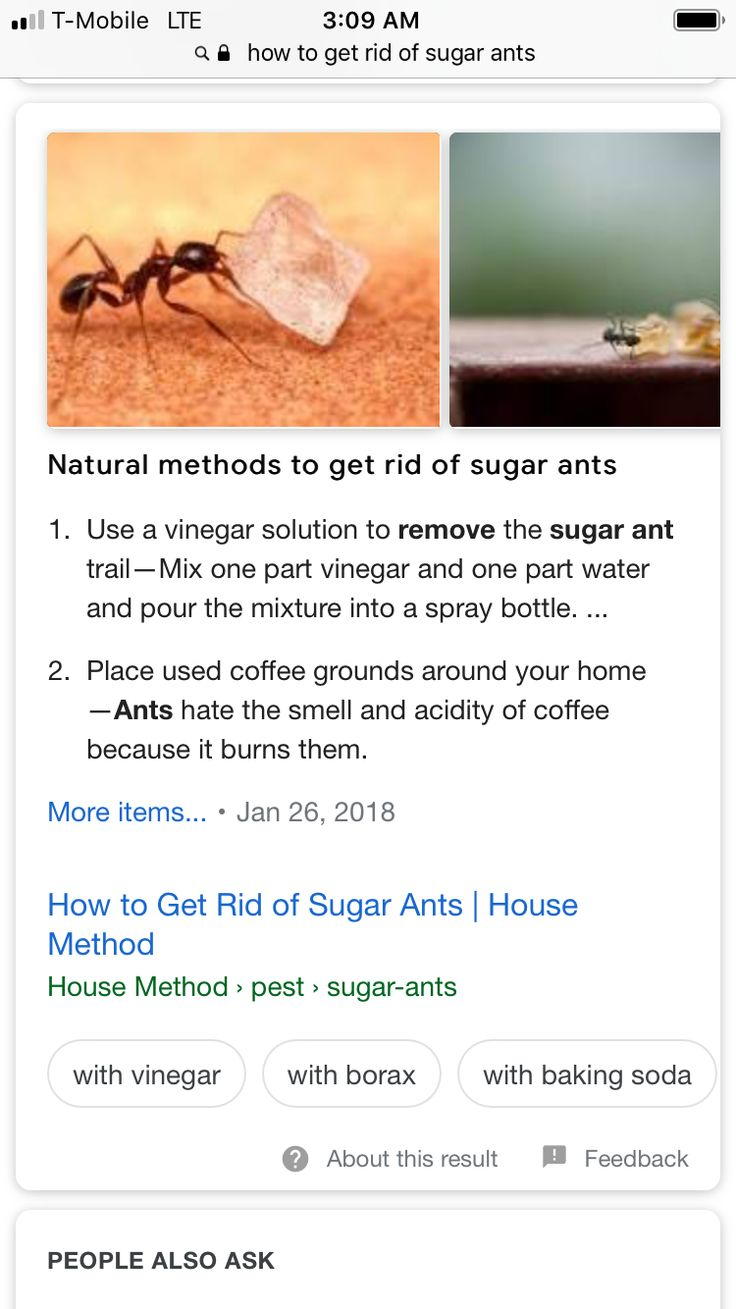 Pin by jan dunham on ants Sugar ants, Ant trail, Ants