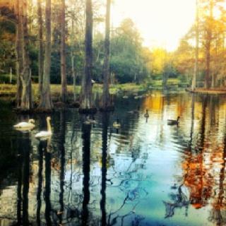 Iris Gardens:)