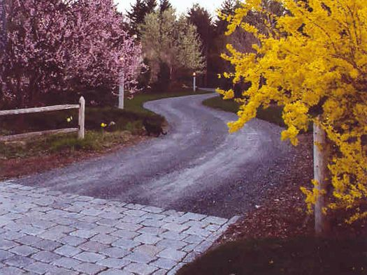 I Love Long Twisty Gravel Driveways Lined With Trees!