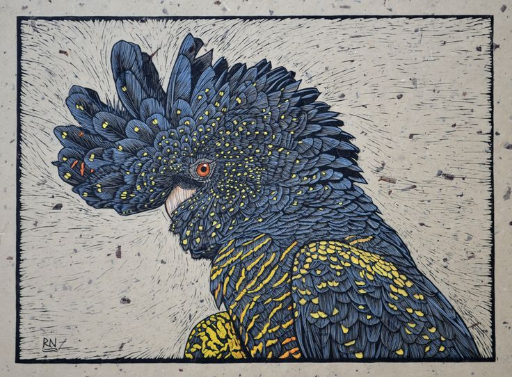 Red-Tailed Black Cockatoo - Hand coloured linocut on handmade Japanese paper by Rachel Newling