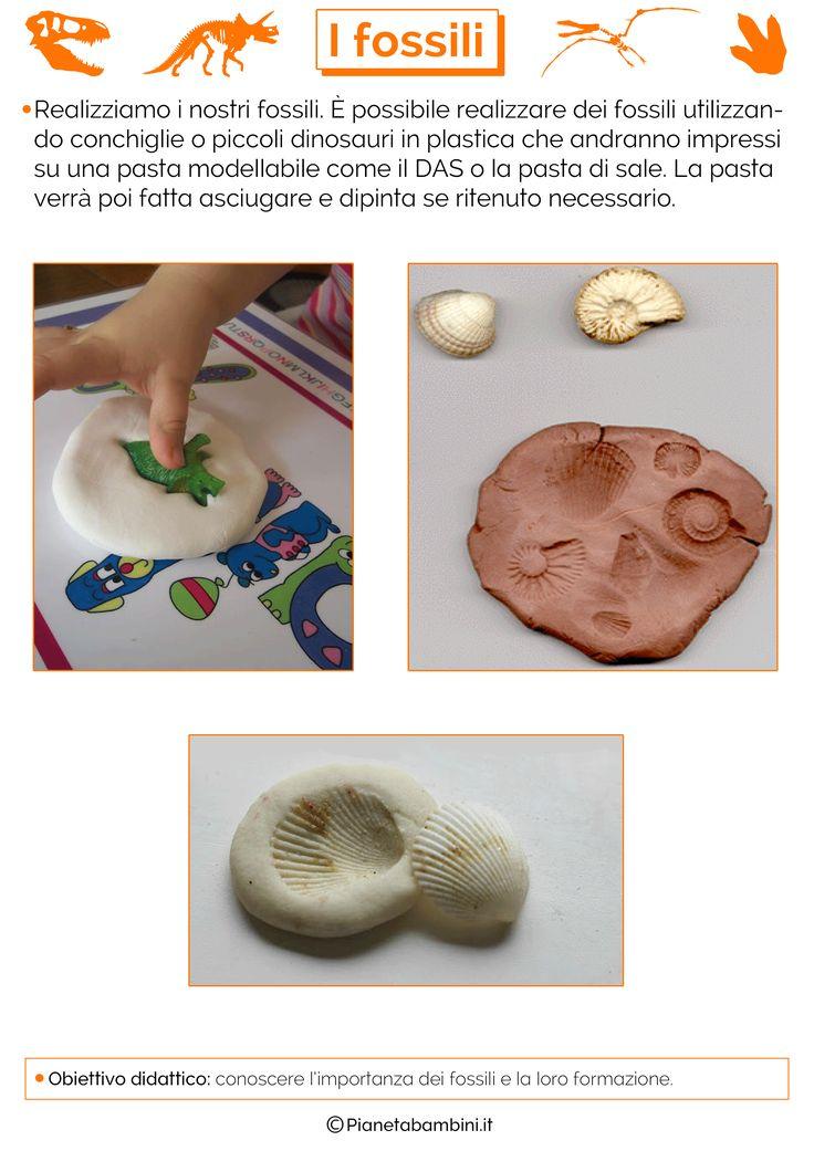 Come si formano i fossili? Tante schede didattiche per la scuola primaria con teoria ed esercizi di verifica sul processo di fossilizzazione in PDF da stampar