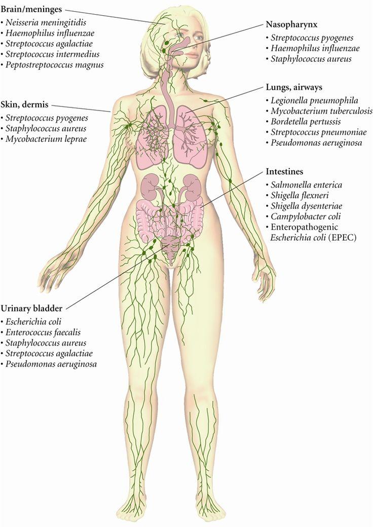Gram-Negative Bacteria » Pathogen Profile Dictionary