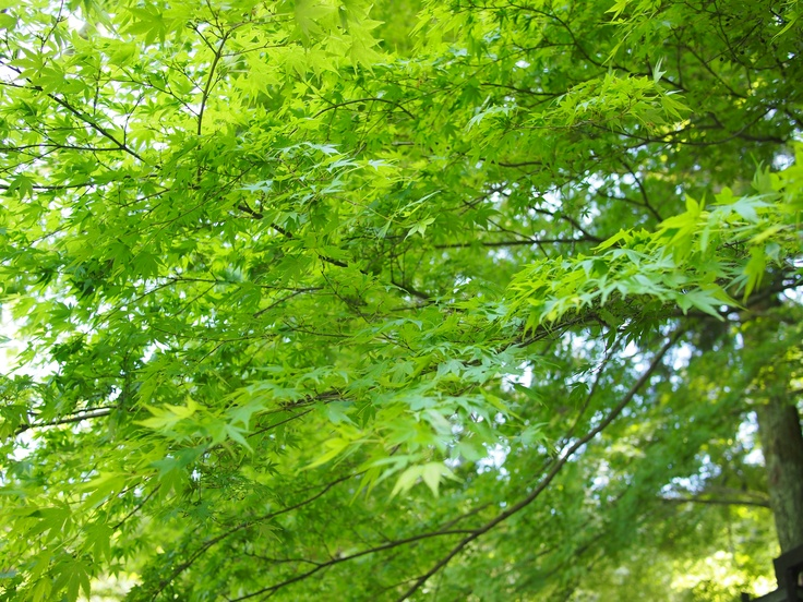 spring greenery