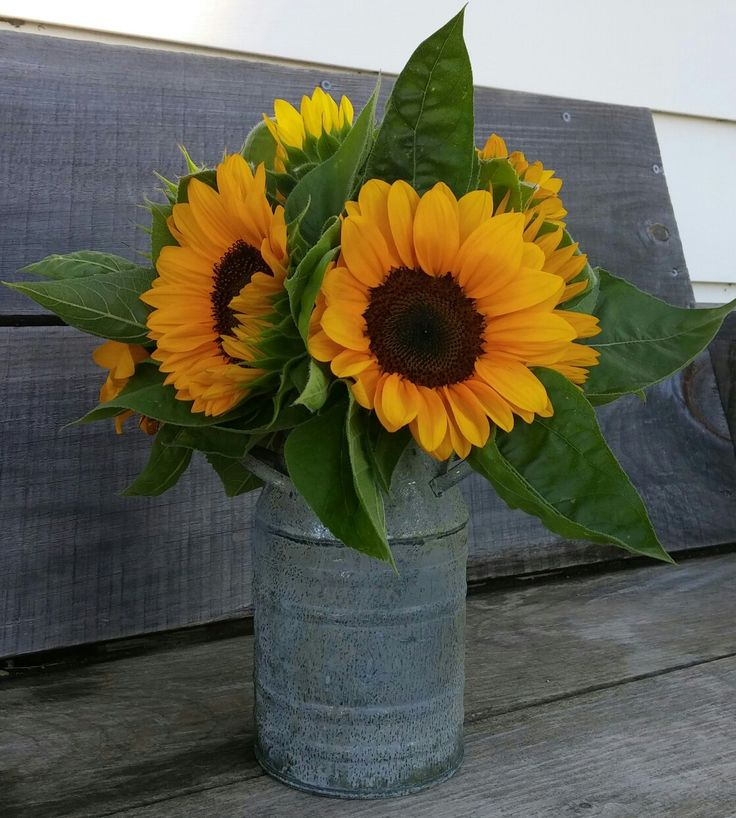 Milk can filled with sunflowers!