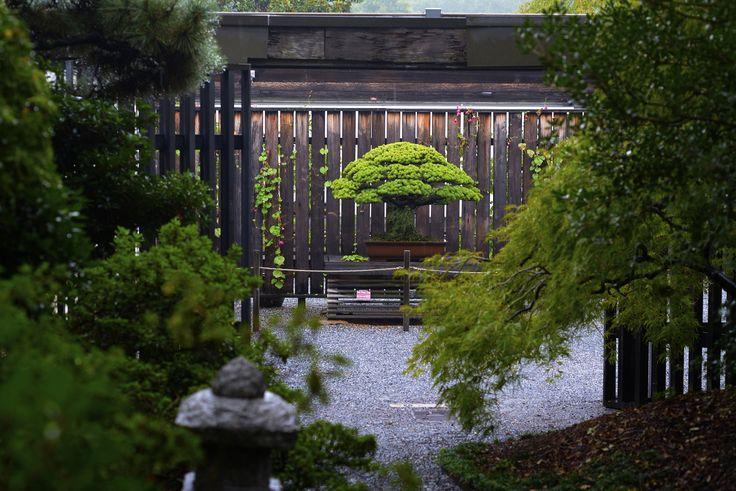 Pin by Bonsai Empire on Great Bonsai trees | Pinterest | Bonsai, Bonsai plants and Pine bonsai