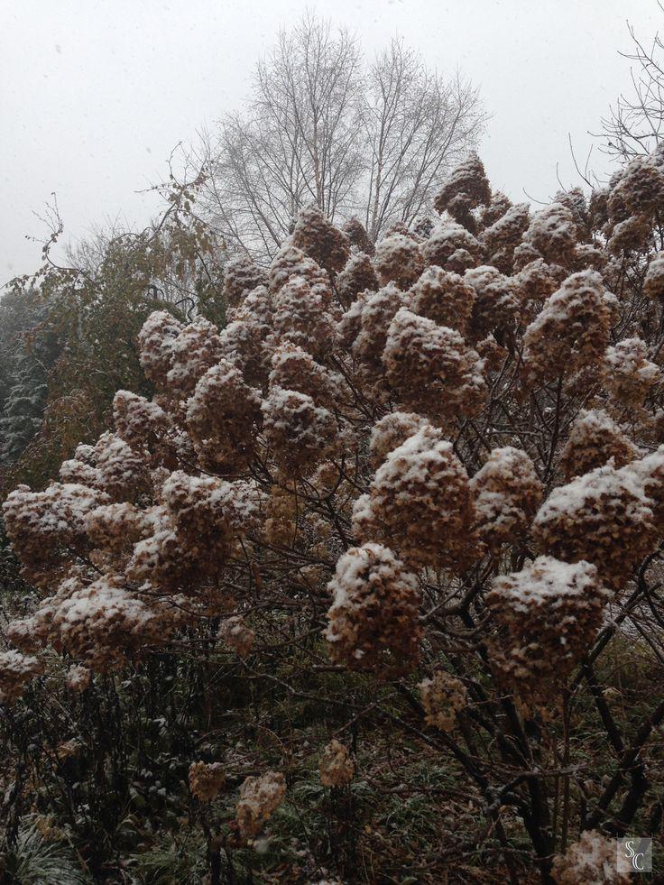 #letitlinger #wintergarden #northwindperennialfarm