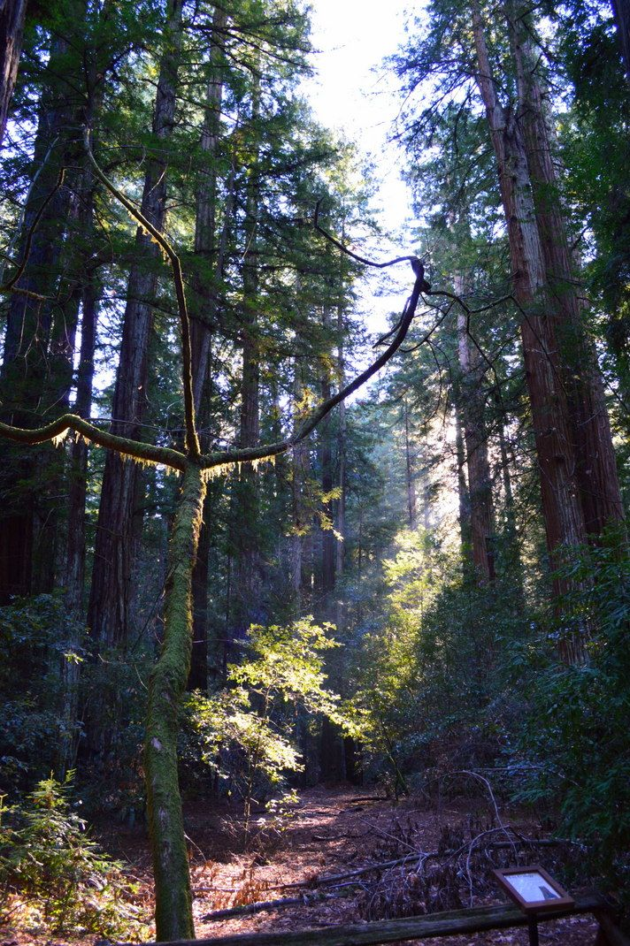 Armstrong Redwoods Preserve in Sonoma County: An Outdoorsy Winter Vacation in Northern California
