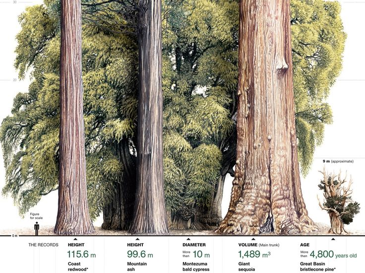 sequoia national park muslim women dating site Giant arches formed by erosion designated a national park in 1971 badlands: np: sw sdak  with some sites dating to 10,000 years ago later pit houses, cliff dwellings, and pueblos cape.