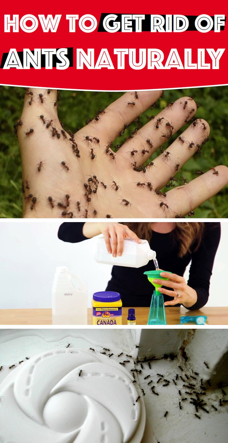 How to get rid of ants naturally baking soda pinterest
