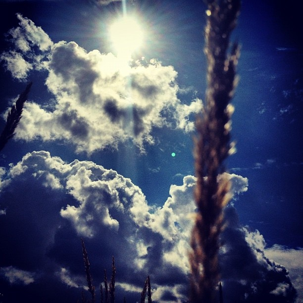 "@barlowc's photo: ""The #sky through a #grass #field"""