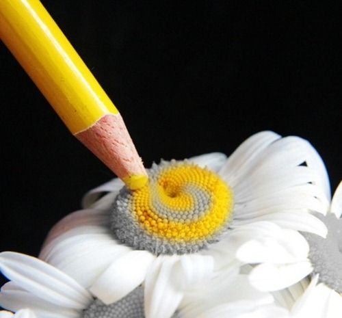 object photography | ... Amazing Macro Photography Of Objects | Creative Photography Magazine