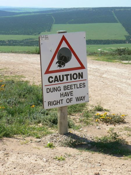 Sign in Addo Elephant Park, Eastern Cape, South Africa. The small dung beetles have right of way! Take the time to watch them roll the dung. They walk backwards:-)