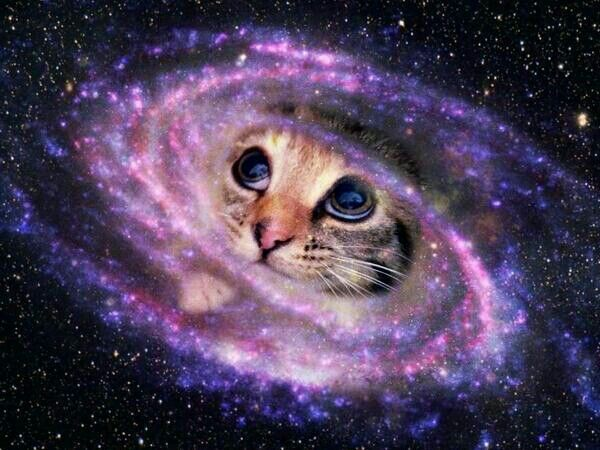 144 best space cats images on Pinterest | Kitty cats ...