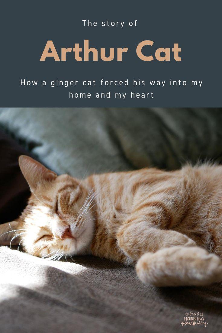 The Story Of Arthur Cat Nourishing Soulfully In 2020 Cats Kitten Meowing Orange Kittens