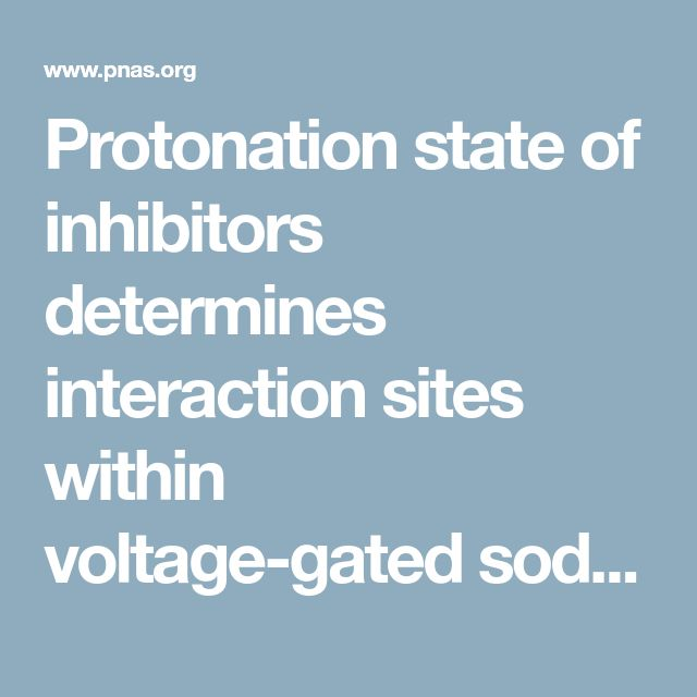 Protonation state of inhibitors determines interaction sites within voltage-gated sodium channels