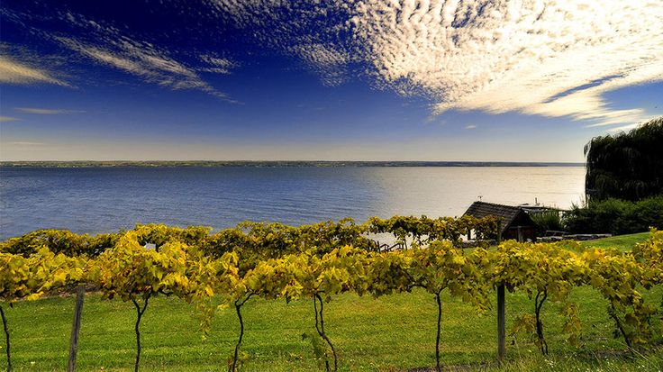 Finger Lakes, New York: Wineries, Favorite Places, Cayuga Lakes, Lakes Wine, Upstate New York, Fingers Lakes, Goo Watches, Lakes Food, Summer Escape