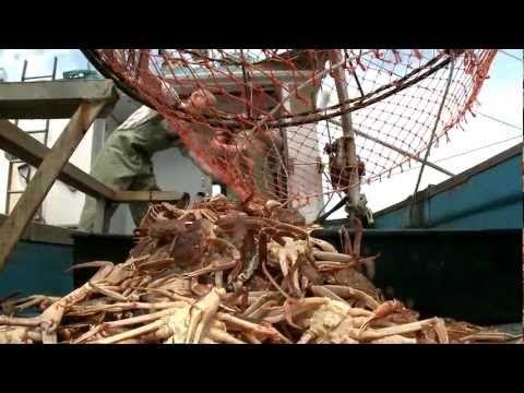 Snow Crab The Movie - YouTube