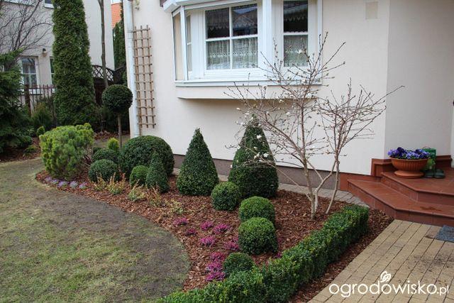 Galeria zdjęć - Łatwe ogrodnictwo - Jak zrobić wertykulację trawnika? - Ogrodowisko