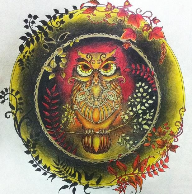 Owl Enchanted Forest Coruja Floresta Encantada Johanna Basford Colouring TechniquesEnchanted Coloring BookColoring