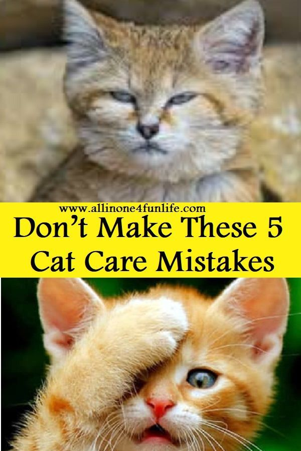 Don T Make These 5 Cat Care Mistakes Cat Cats Animal Animals Pet Kitten Pets Lovecat Mistake Care Cat Care Kittens Funny Funny Animals
