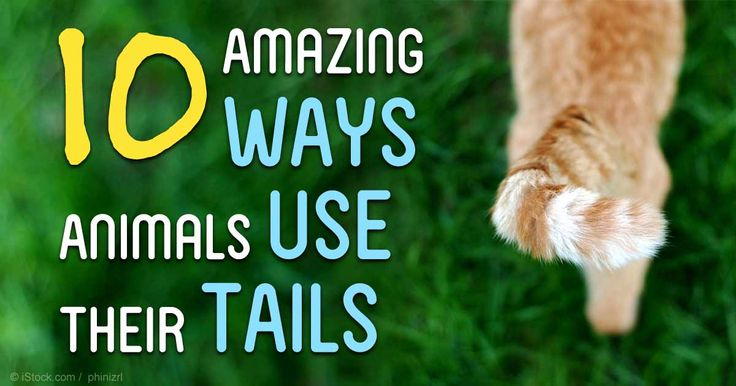 Animal tails are incredibly useful for many reasons -- here are some amazing uses.
