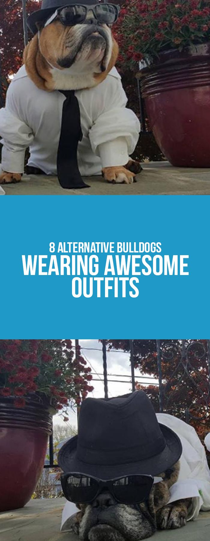 Keep the fun on our blog post!  #bulldogs #costumes #outfits # animals #pets #dogs #frenchies #tips #funny #puppies