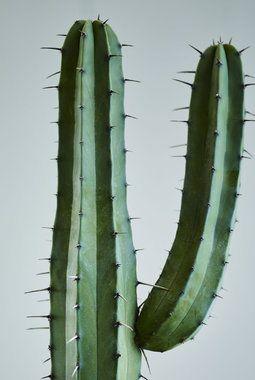 Trendy med sukkulenter og kaktuser | Inspirasjon fra Mester Grønn