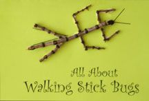 Walking Stick Book Craft From www.daniellesplace.com