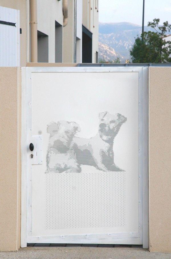 chiens-acianov-creation-photo3