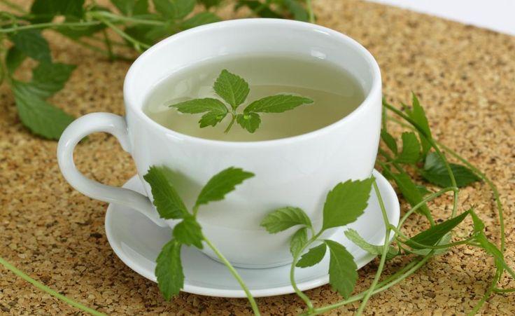 Die Blätter können frisch oder getrocknet als Tee zubereitet werden