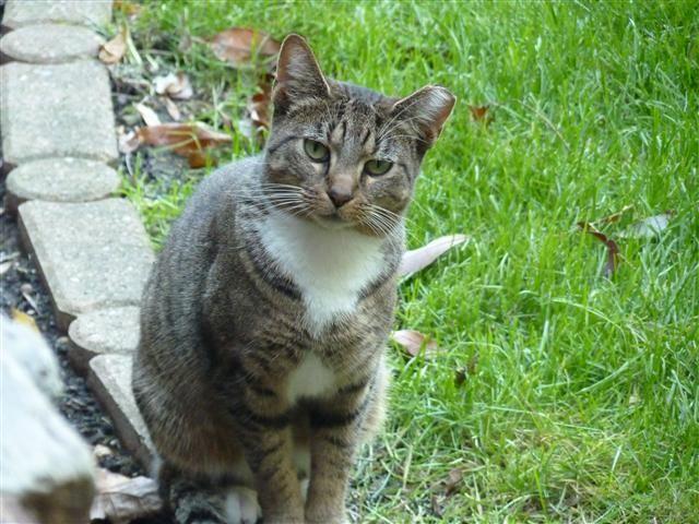 Elkhart Feral Cat Coalition