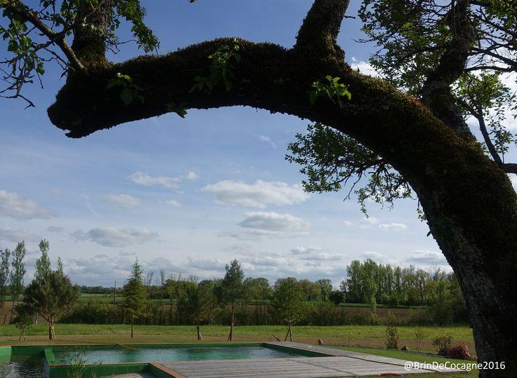 Bassin de baignade naturelle - Piscine écologique - à Brin de Cocagne - Chambre d'hôtes écologique de charme dans le Tarn près d'Albi - Brin de Cocagne